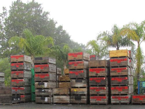 Olivado boxed avocados in Kenya